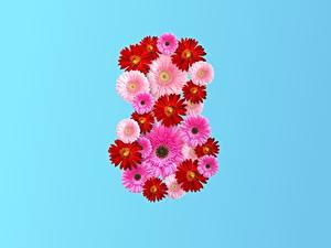 Фотография 8 марта Гербера Цветной фон цветок