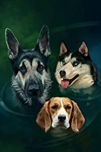 Обои Рисованные Собаки Вода Овчарки Хаски Бигля Трое 3 Голова Животные