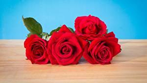 Фото Розы Красные