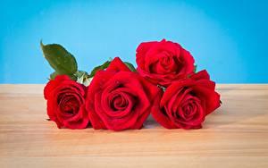 Обои для рабочего стола Розы Красные Цветы