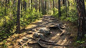 Фотография Россия Сибирь Леса Камень Деревья Тропинка Baikal Природа