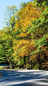 Картинка Штаты Парки Осень Леса Дороги Vogel State Park