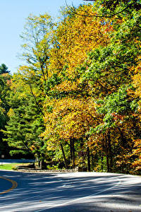 Картинка Штаты Парки Осень Леса Дороги Vogel State Park Природа