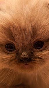 Обои Кошки Глаза Котят Морды животное