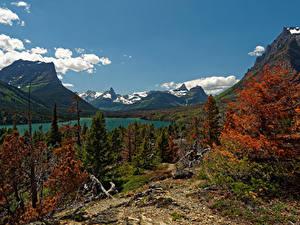 Обои для рабочего стола Штаты Парк Гора Озеро Осенние Пейзаж Ели Saint Mary Glacier NP Природа