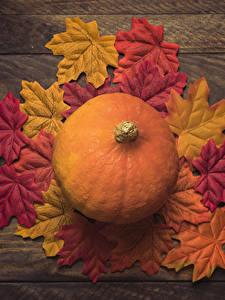 Обои Осень Тыква Листья Природа