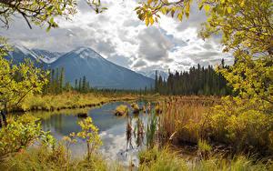 Фотография Канада Осенние Горы Озеро Пейзаж Ветка Vermilion Lakes Природа