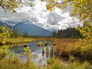 Фотография Канада Осенние Гора Озеро Пейзаж Ветка Vermilion Lakes Природа