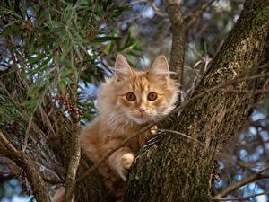 Картинка Кот Ствол дерева Рыжая Животные
