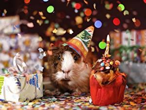 Картинки Морские свинки Рождество Свечи Пламя Подарки Взгляд Конфетти Животные