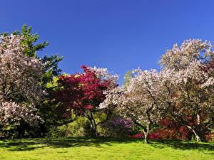 Фотография Весна Цветущие деревья Парки Газон Природа