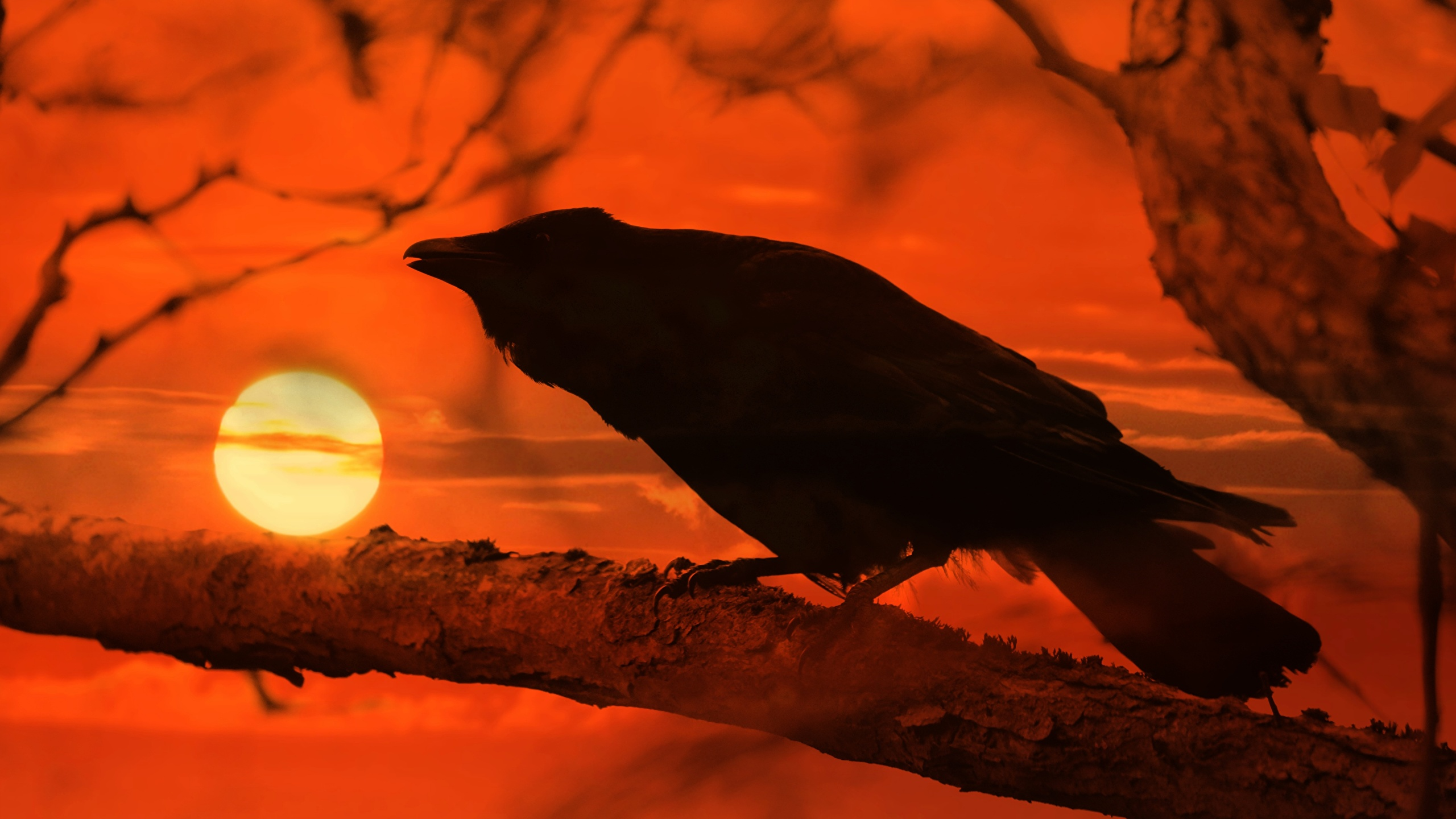 Картинки ворона Солнце рассвет и закат на ветке животное 2560x1440 Вороны солнца Рассветы и закаты Ветки ветка ветвь Животные