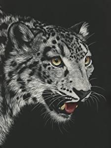 Фотография Рисованные Большие кошки Ирбис Черный фон Черно белое Голова Усы Вибриссы Смотрит Животные