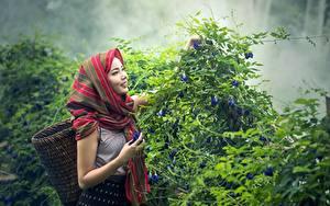 Картинки Азиаты Кусты Улыбка Корзина Туман Девушки