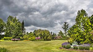 Фотография Штаты Сады Газон Дерево Tower Hill Botanical Garden Природа