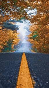 Фотографии Дороги Осень Асфальт Деревья Полоски