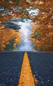 Фотографии Дороги Осень Асфальт Деревья Полоски Природа