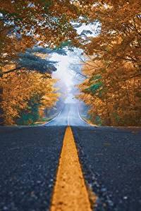 Фотографии Дороги Осенние Асфальта Дерево Полосатый Природа