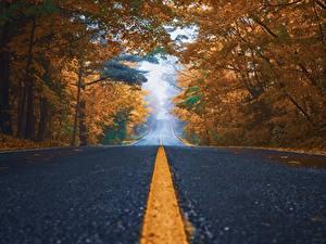 Фотографии Дороги Осенние Асфальта Дерево Полосатый