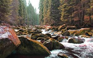 Картинки Камень Осенние Лес Мох Ручеек Природа