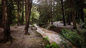 Фотография Израиль Парк Речка Мосты Дерева Northern Природа