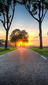 Фото Рассветы и закаты Дороги Трава Дерево Асфальта Природа