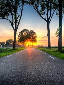 Фото Рассветы и закаты Дороги Трава Дерево Асфальта