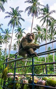 Фото Тропики Обезьяны Пальмы Забор Животные