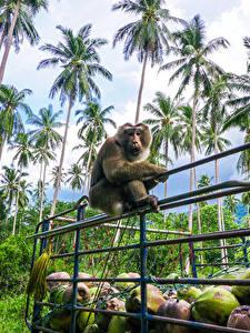 Фото Тропики Обезьяна Пальм Забор Животные