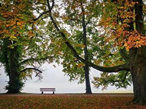 Фотография Осенние Парки Скамья Деревья Природа