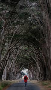 Фотография Дороги Дерево Гуляет Природа