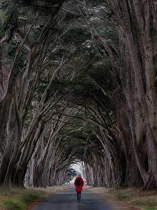 Фотография Дороги Дерево Гуляет