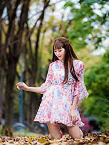 Картинка Азиаты Осень Шатенки Платье Листва Боке Девушки