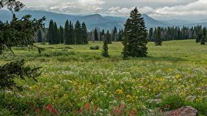 Картинка США Поля Трава Ель Colorado Природа