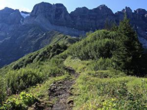 Фото Швейцария Гора Кустов Ели Тропинка Champéry Природа