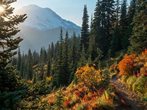 Обои США Парки Осень Гора Ель Mount Rainier National Park Природа