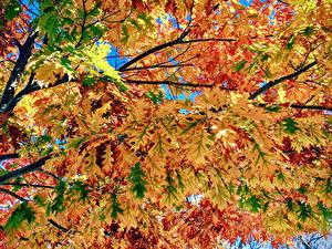 Картинка Осенние Вблизи На ветке Лист Природа