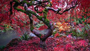 Картинки Парки Осень Пруд Деревья Листва Мох Природа