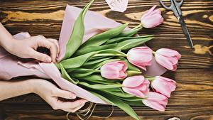 Картинка Тюльпаны Руки Цветы