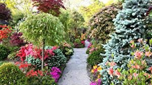 Фотографии Англия Сады Альстрёмерия Кусты Тропа Walsall Garden Природа