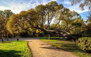Фотография Россия Санкт-Петербург Осенние Парки Деревья Park Ekaterinhof Природа