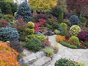 Фотографии Англия Сады Кустов Скамья Walsall Garden Природа