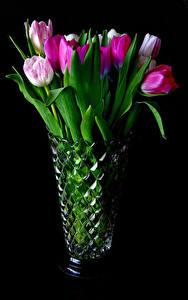 Фото Тюльпаны Черный фон Ваза Цветы