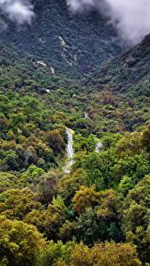 Фотография США Парк Лес Калифорнии Sequoia National Park Природа
