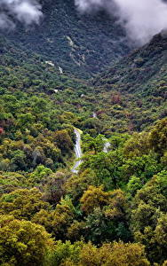 Фотография США Парки Леса Калифорния Sequoia National Park Природа