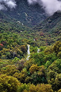 Фотография США Парки Леса Калифорния Sequoia National Park