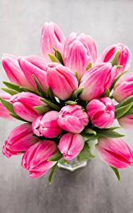 Картинка Букет Тюльпан Крупным планом Розовая Цветы