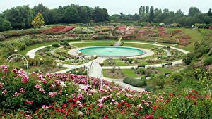 Фото Франция Парки Фонтаны Розы Газон Кустов Caen Природа
