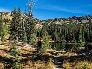 Обои США Парк Озеро Горы Ели Sheep Lake Rocky Mountain National Park Природа