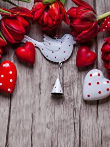 Картинки День всех влюблённых Тюльпаны Птица Доски Красный Серце Колокольчики цветок